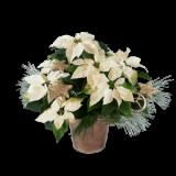 Dekorert, hvit julestjerne