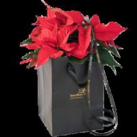 Rød julestjerne i gavepose – stor